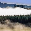 Fog Beams