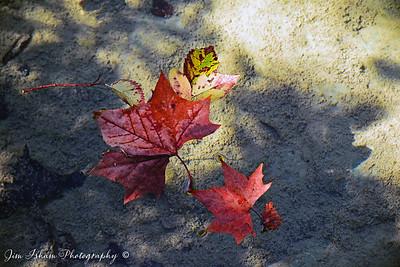 Autumn POD 10.19.17