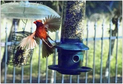 Bird Potpouri 6.17.17