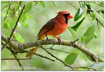 Birds POD 7.3.17