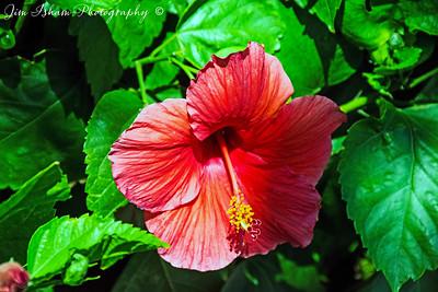 Blossoms POD 9.15.17