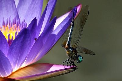 Bugs POD 4.5.18