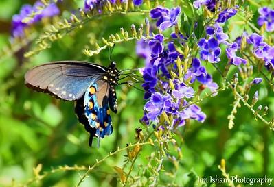 Bugs or Butterflies POD 10.13.17