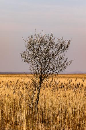 Biebrza National Park.