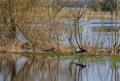 Biebrza National Park - stork.
