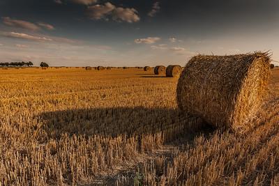 Landscape near Janikowo.