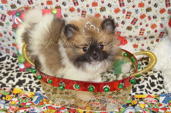 3164,Party Pom, Black/Brown/White, Female