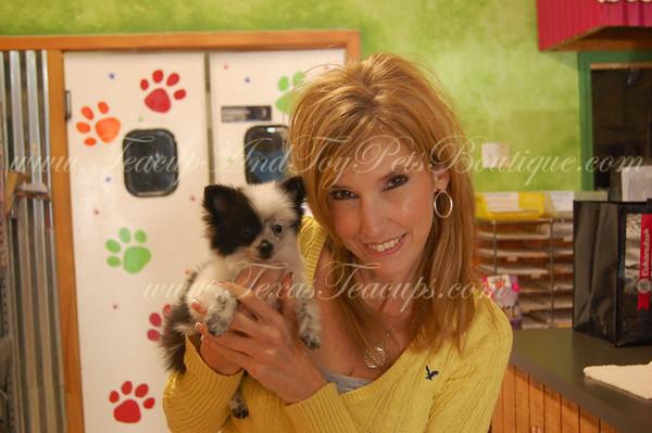 Pomeranian Puppy 2285 (Photos & Videos)