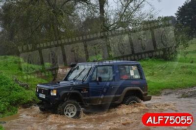 ALF75055