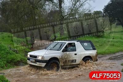 ALF75053