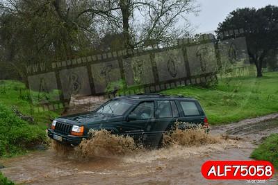 ALF75058