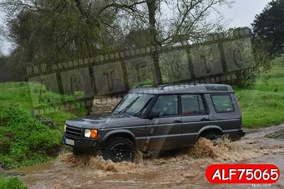 ALF75065