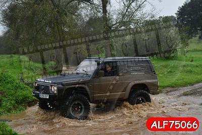 ALF75066
