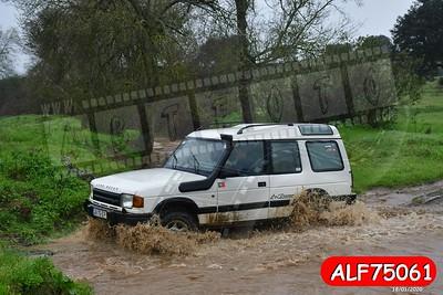 ALF75061
