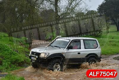 ALF75047