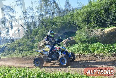 ALF75085