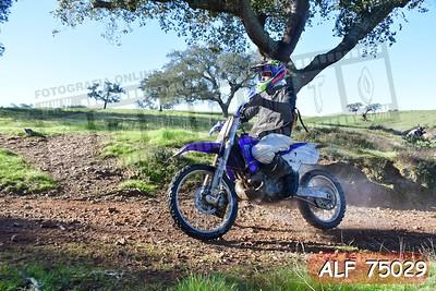 ALF 75029