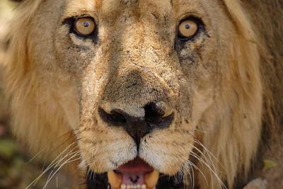 WILDLIFE | дикие животные