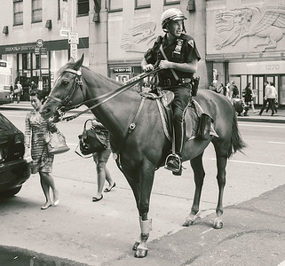 Mounted_10331218304_l