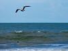 Seagull-002