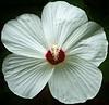 Flower-002
