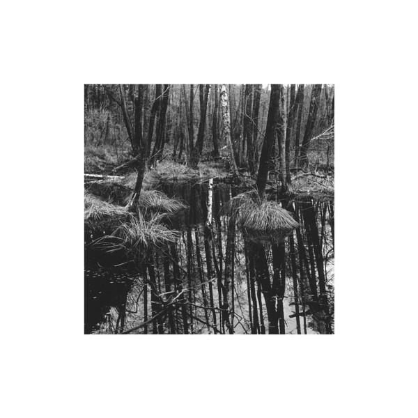 V zrkadle skrýva<br /> poškvrnená breza sny<br /> všetkých milencov.