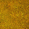 Yellow Seashore Moss