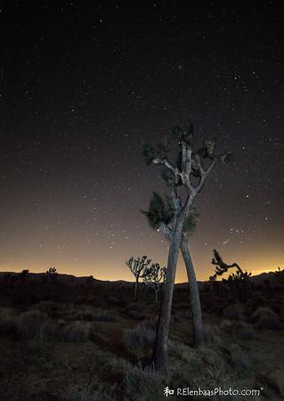 Joshua Tree Starry Night