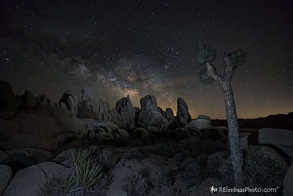 Joshua Tree Milky Way