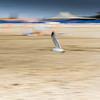 The Gull Dance