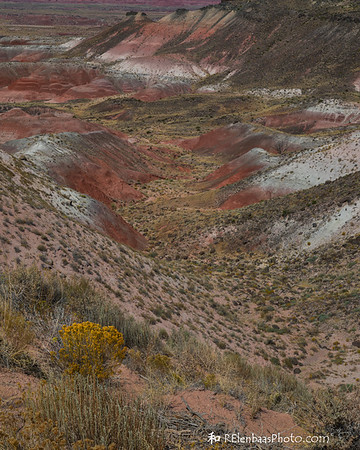 Petrified Forest III, Painted Desert