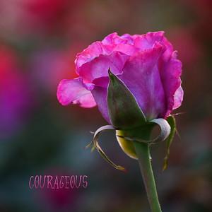08 Allen_G9_Floral_Standout P1154212