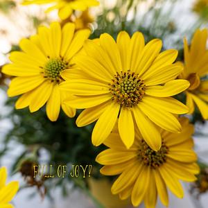 06 Happy P1023639 daisy