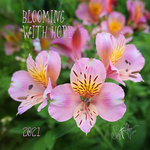 00- Blooming P1034857