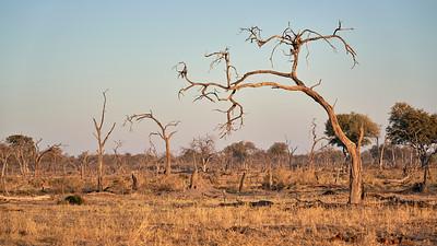 """Landscape (Maun / North-West / Botswana - 19°6'1.44"""" S 23°51'58.44"""" E)"""