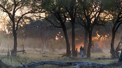 """Landscape (Maun / North-West / Botswana - 19°6'39.059"""" S 23°50'10.859"""" E)"""