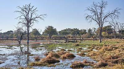 """Landscape (Maun / North-West / Botswana - 19°6'11.279"""" S 23°49'42.599"""" E)"""