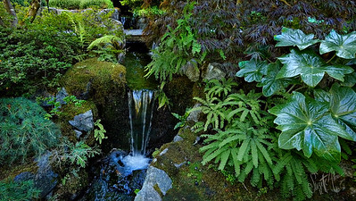 Ferns and Waterfall