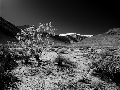 Desert Wind Cinemagraph