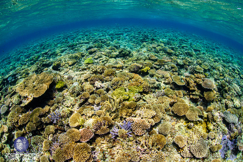 Coral Reefs of Yabiji, Miyako Island