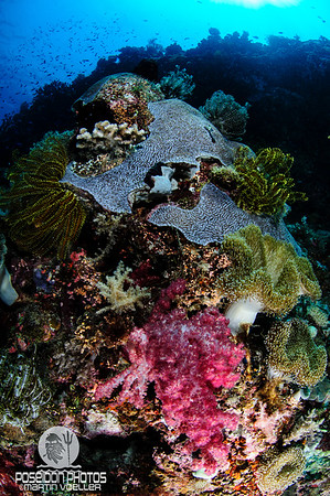 Lush Coral Reef