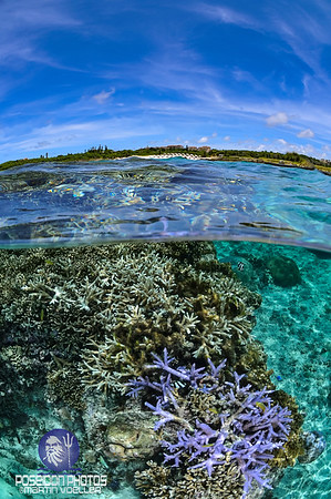 Split Shot of Coral Reefs