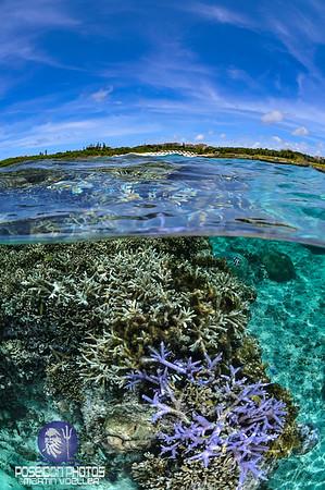 Split Shot of Coral Reefs