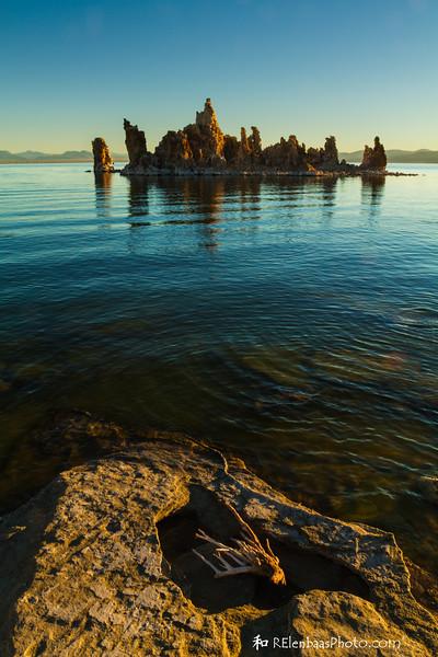 Mono Lake Flotsam