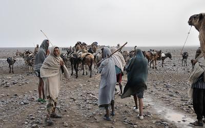 Chameliers (afars) éthiopiens