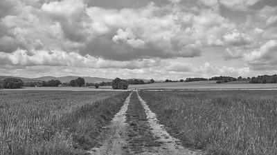 20200524 Ars sur Formans randonnée (Saint-Didier-de-Formans/Auvergne-Rhône-Alpes/France - N45°57.886' E4°46.365' - Altitude : 225)