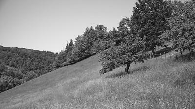 20200517 Bocsozel randonnée (Saint-Hilaire-de-la-Côte/Auvergne-Rhône-Alpes/France - N45°23.782' E5°19.558' - Altitude : 439.40)