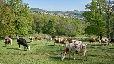 "Mornant randonnée avril 2017 -  45°37'28"" N 4°38'9"" E - 513,0m (Saint-Sorlin - Auvergne-Rhône-Alpes)"
