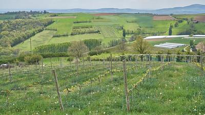"Mornant randonnée avril 2017 -  45°37'38"" N 4°37'9"" E - 607,0m (Chausson - Auvergne-Rhône-Alpes)"