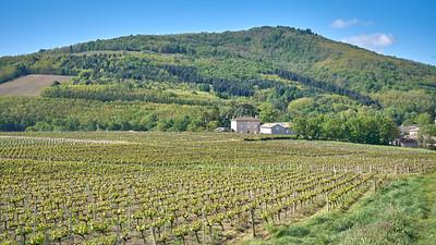 """Juliénas randonnée mai 2017 - 46°14'4"""" N 4°42'46"""" E - 264,4m (Juliénas - Auvergne-Rhône-Alpes)"""